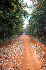 Red Soil Avenue I (Mainak Roy Camerawork) Tags: canon 600d avenue landscape leaves trees red soil road fall autumn green orange flickr forest flora top t3i rebel raw depth field teal natgeo national geographic