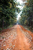 Red Soil Avenue I (Mainak Roy Camerawork) Tags: canon 600d avenue landscape leaves trees red soil road fall autumn green orange flickr forest flora top t3i rebel raw depth field teal natgeo national geographic nature