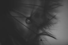 (Kathy M photography) Tags: sony sonya65 sonyalpha bw blackandwhite blackwhitegray blackwhite kathymphotography drop darkness dark dandelion flower flowerpower flowerandmacro macro macrophotography macrolens macroflower macroart monochrome