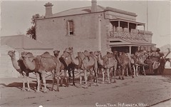 Camel team at Port Augusta West, S.A. - very early 1900s (Aussie~mobs) Tags: vintage southaustralia camelteam portaugustawest portaugusta hotel camels teamster