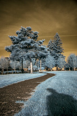 Paths (Strong Photography) Tags: infrared tree slow shutter