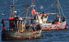 Gone Fishing (RoystonVasey) Tags: roaming email upload canon eos 77d 70300mm usm zoom scotland loch broom ullapool sea fishing boat buoy buoyant