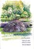 Marais des Vursys (spiro_pi10) Tags: maraisdesvursys yvonand suisseswitzerlandch marais mauguettaz nature roseaux aquarelle eau