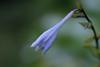 DSC_3950 (Oleg1961) Tags: tokina atx pro 100mm f28 d macro autumn flowers insects dew grass