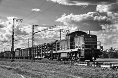 Train 294 659 (b_kohnert) Tags: blackandwhite schwarzweis monochrome einfarbig train