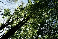 DSC06621 (olliethewino) Tags: bath priorpark trees