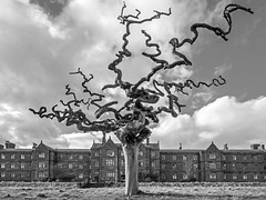 Gnarly tree Outside the Asylum (Craig Hannah) Tags: gnarly tree asylum building derelict decay abandoned derelectbuilding hospital scotland uk bw blackandwhite dead sunnysideroyalhospital montrose montroselunaticasyluminfirmarydispensary craighannah april 2018 sky twisted branches eerie deadwood photography photo canon urbanexplore landscape old park trees twigs fingers watching witness