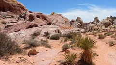 More Valley of Fire State Park (Lone Rock) Tags: valleyoffire nevada redrock desert gordoncottrell southwestus geology