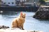 Cat Island Adventure (Aoshima 青島) (HMrChuK) Tags: cat 貓 猫 青島 aoshima