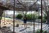 IMG_1760 (iphoneofkhanh) Tags: 12052018 botanic loyal garden g