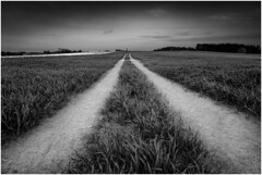 Path (Nordtegn) Tags: path weg chemin feld field champ grass l´herbe outdoor fotorahmen einfarbig landschaft paysage landscape fujixpro2 fujinonxf14mmf28 bw black blackandwhite blackwhite white nb noir noiretblanc blanc himmel ciel sky sw schwarz schwarzweiss schwarzweis schwarzundweis weis weiss bianconero mono monochrom monochrome monochromatic gras