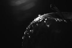 365 - Image 134 - Low key - droplets on an apple.. (Gary Neville) Tags: 365 365images 5th365 photoaday 2018 sony sonycybershotrx100v sonyrx100v rx100v v mk5 garyneville