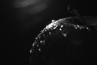 365 - Image 134 - Low key - droplets on an apple..