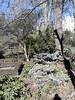 Winter tones of green, Royal Botanical Gardens, Winter 2018 (d.kevan) Tags: parksandgardens botanicgardens royalbotanicalgardens madrid spain plants shrubs flowers everlasting