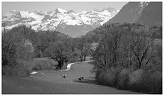 Country road (VandenBerge Photography #goneforawhile) Tags: amsoldingen cantonberne switzerland alps lonelyplanet landscape europe mono blackandwhite mountains forest fields cows