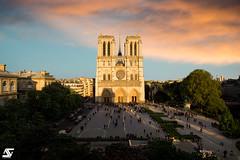 Lumière dorée (A.G. Photographe) Tags: anto antoxiii xiii ag agphotographe paris parisien parisian france french français europe capitale d850 nikon 2470 notredame goldenhour seine