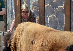 Feed the Bison (MTSOfan) Tags: bison woman feed feeding epz zoo smile