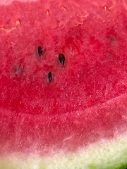 Lycopene (All made of) Tags: eating food watermelon closeup health fruit