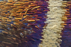 Butterfly wing scales (D j a n g O) Tags: macro wing scales butterfly studio extrememacro focusstacking stacking microscope texture insect insecte papillon adelidae
