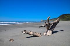 Humboldt Lagoon State Park - Humboldt County - California (TravelMichi) Tags: californa california travel usa2018 trinidad usa us