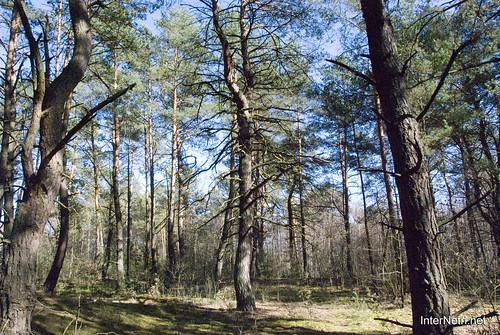 Волинський ліс InterNetri Ukraine 0771384140