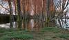 Luz en los chopos (pascual 53) Tags: navarra lagunadelor canon5ds 1635mm ocaso calma chpos inundacion