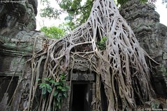 Ta Prohm temple door (KENO Photography) Tags: angkor area cambodia covered ficus fig gate prohm raider roots strangler temple tomb ancient archaeological archaeology architecture basrelief bayon buddhism measure tree forest branch door ruin rainforest root plant outdoorstructure oldgrowthforest tombraider taprohm wallpaper