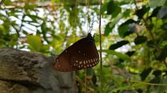 20180523_110022 (TheSlayerNL) Tags: wildlands emmen zoo dieren animals adventure wildlandsadventurezoo