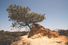 DSC_7105 (M.Bohm Photography) Tags: nikon d750 tamron 2875 f28 nature hike torrey pines state reserve san diego california southwest united states landscape summer tree