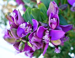 May Blossoms (Colorado Sands) Tags: flores flowers flower fiori fleur floral plant bloemen blommor blossoms blomma blossom blooms blossoming blooming fleurs flor españa espagne spain spanish spanien europe sitges sandraleidholdt catalonia