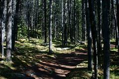 OpalHiills00019 (jahNorr) Tags: summertrip 2012 canadaalbertajaspernationalparkopalhills
