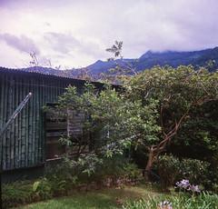 Boquete, Panama (stefaniesmith1) Tags: bamboo hut hillside boquete panama travel film mediumformat lubitel twinlens