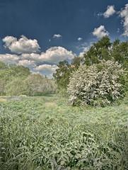 AvalonMarshes(HamWall)No49 - Copy (iankellybn26dj) Tags: uk england dorset glastonbury landscape wetland sky summer spring hdr green foliage trees marshes marsh avalon albion