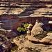 Rock Walls and Meanders Around the Sipapu Bridge (Natural Bridges National Monument)