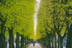 Spring is here | Kaunas #115/365 [Explored] (A. Aleksandravičius) Tags: spring people green trees here europe kaunas freedom avenue laisvės alėja lithuania lietuva day nikon nikond750 d750 135mm 135mmf2d nikon135f2 nikon135mmf2dc 135 nikon135mm nikonafdcnikkor135mmf2d nikkor135 nikkor 365days 3652018 nikkor135mm 365 project365 115365