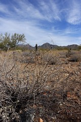 DSC01574 (Kate Hedin) Tags: frank lloyd wright flw taliensin west desert tour cactus plant architecture apprentice cottage land mountains hills terrain