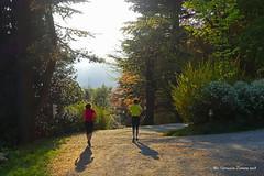 Running in Burcina (guardare in Large premere L) (Ferruccio Zanone) Tags: burcina parco pollone biella running corsa footing vita all'aperto