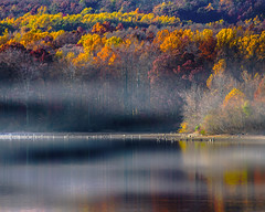 Foggy Lake (Daveyal_photostream) Tags: foggy lake autumn trees landscape d600 nikon nikor nature meandmygear mygearandme mycamerabag motion movement beautiful shor coastline photoshop lightroom nik greatphotographer greatphotographers anawesomeshot reflecting reflection
