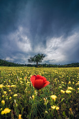Spring (Vagelis Pikoulas) Tags: poppies poppy flowers flower nature landscape april sky spring 2018 canon 6d tokina 1628mm view clouds cloudy cloudscape