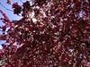 #BearCreekPark - #NatureLovers #GetOutside #Springtime in #TheSprings #LoveColorado #Awe #FridayFeeling #Grateful #GodIsGood (AmeliaPhotoAme©) Tags: bearcreekpark naturelovers getoutside springtime thesprings lovecolorado awe fridayfeeling grateful godisgood