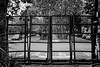 DSC02617LR (Charly Amato) Tags: calle street laplata buenosaires argentina argentine sony a6000 1835 sigma 18 manual bw bn blancoynegro blackandwhite monocromático monocromatico monocromo rejas enrejado