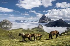 Collado des Moines by Jabi Artaraz - Un lugar precioso de los Pirineos Con el pico de Midi D´Ossau al fondo.