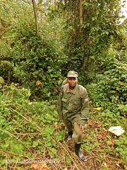 Jungle trek 2 (Wise Ollie) Tags: africa uganda bwindiimpenetrableforest bwindi impenetrable forest rainforest jungle local guide walk hike trek mountains african