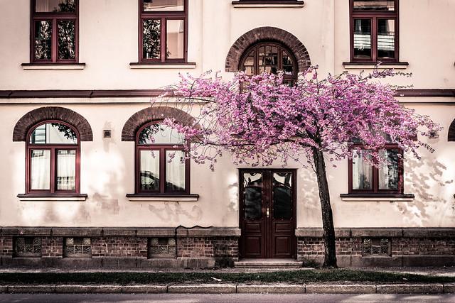 Blooming in Oslo