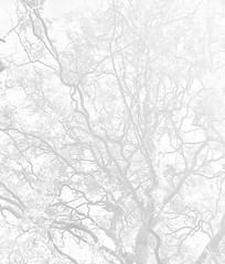 Vaisseaux - Vessels (Charlotte P.Denoel) Tags: arbre abstrait abstract tree imagination vessels vaisseaux blanc white sang