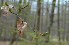 DSC_2928 Frühling - spring (baerli08ww) Tags: deutschland germany rheinlandpfalz rhinelandpalatinate westerwald westerforest wald forest frühling spring frühlingsfarben springcolors