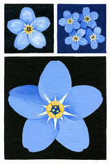 Forget-me-not! (Martin Blunt) Tags: forgetmenot blue colbertblue flower sketchbook backgrounds geometry gouache watercolour bodycolour