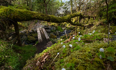 Exploring! (Rob Pitt) Tags: cymru uk rob pitt photography landscape wood forest tree grass serene betwsycoed 750d 1018mm efs
