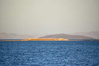 Egg Island: a refuge for California gulls, double crested cormorants, and great blue herons