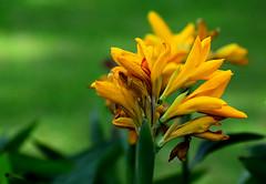 Good Afternoon (SHAN DUTTA) Tags: nitdurgapur nikon fantasticflower